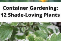 Plants shade loving
