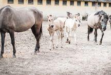 Turystyka konna w Wielkopolsce / Na tej tablicy pokażemy miejsca, gdzie można w Wielkopolsce nauczyć się podstaw jeździectwa i trenować już nabyte umiejętności.
