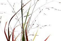 grass 화초