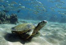 Piękno Ziemi:  Podwodny świat
