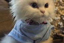 Gatos ^~^