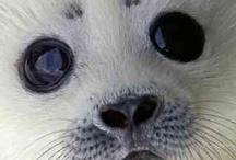 zeehondjes / heel koud het vriest