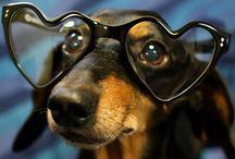 Animal with glasses / audaxeyewear.etsy.com
