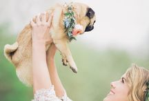 Pets at Weddings   How To Include Your Pets