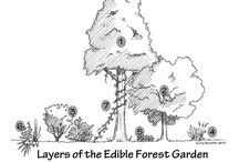 Garden ~ Sustainable