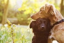 Animal Kingdom / animals / by Katie Robinson