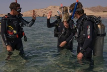 Go Pro Diving in Sharm el Sheikh / Turning your hobby into a profession can be incredibly rewarding. To be able to give others their first experience of breathing underwater is real job satisfaction! For over 13 years, Red Sea Diving College has been creating the best Divemasters and Instructors in the business. On an Instructor Development Course(IDC) we have the highest instructor pass rate in Sharm and we were one of the first PADI CDC centers in the world.