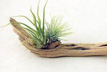 Planten en decoratie in huis