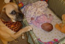 Babies and their's dogs
