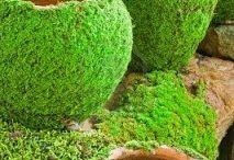 own moss