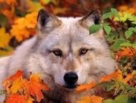 Wolves / by Jo Doer