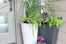 Front porch plant idea