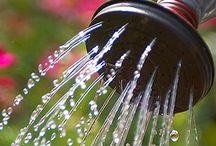 Water wise / Water wise strategies