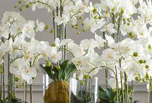 Orchids arrangements