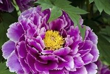 Λουλουδια / Λουλούδια