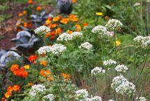 Liz's Edible Flower Garden