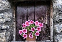 finestre fiorite / floral windows