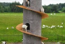 For Goats