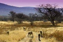 TOUR TA - Namibia / Assapora la libertà della solitudine nel deserto, Il blu del mare e il rosa dei fenicotteri e ovviamente, la scenografia sbalorditiva della savana africana ti regalerà safari difficili da dimenticare.