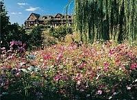 Ozark Mountain Spring / by Explore Branson