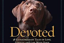 Dog Book Best Sellers
