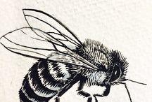 včely, brouci a tak