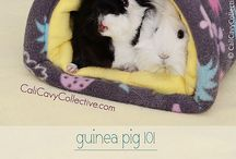 Guinea pigs:The ultimate guide! / This board tells you all about Guinea pigs and how to look after them.