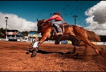 Horsey stuff - western