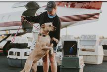 Pet Charity