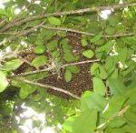 #Bee Removal Service Apopka