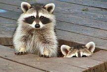 Animaux / Les petits animaux mignons