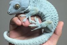 Reptiles <3