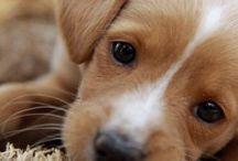 Kutyus, Dog, Hund