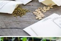seeds cuttings