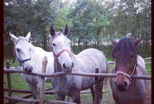 Horses ❤ / I looooove horses (: