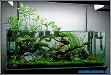 Aquarium paludarium vivarium terrarium