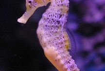 sea horse / by Elfware