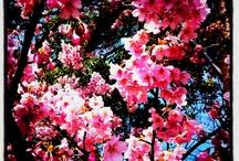 Flower / by Chizuko Ohtsuka Ishiguro