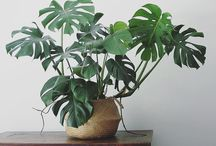 — plants —