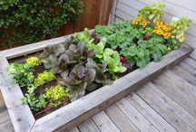 my kind of garden
