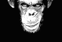 Faces Chimp