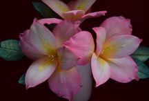my sweet flowers