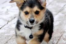 Dog / Cute,funny...:-)