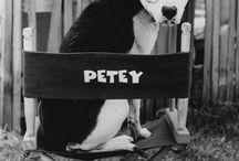 Walk the dog / Favorite animated Dogs, Disney, Pixar, comics