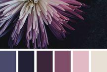 Pallete - Colori