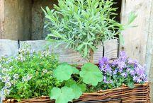 Windowsill garden / Windowsill and pot gardening