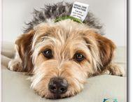Pet Health Tips