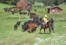 Ranch Activities / Bonanza Creek is a part of the Voldseth Land & Cattle Co. - a 25,000 acre working cattle ranch.