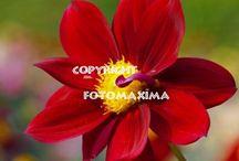 Blumen und Pflanzen / Alle Arten von Blumen und Pflanzen