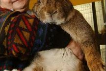 Bun Buns / For the LOVE of Rabbits ~ dedicated to my Fuzz Muffin Humphrey / by Heidi Rae Harris